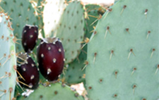 image of a cactus